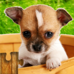 Dogs Jigsaw Puzzles Game – For Kids Adults 25.1 MOD Unlimited Money Download
